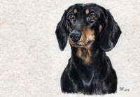 Fiona Vickery - Animal Portraits: Flitzie