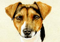 Fiona Vickery - Animal Portraits: Jack Russell