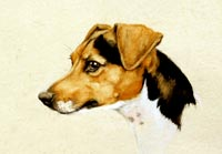 Fiona Vickery - Animal Portraits: Jack Russell Terrier