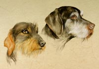 Fiona Vickery - Animal Portraits: Two Dogs