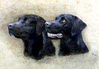 Fiona Vickery - Animal Portraits: Black Labradors