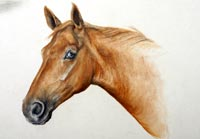 Fiona Vickery - Animal Portraits: Portrait of a Mare